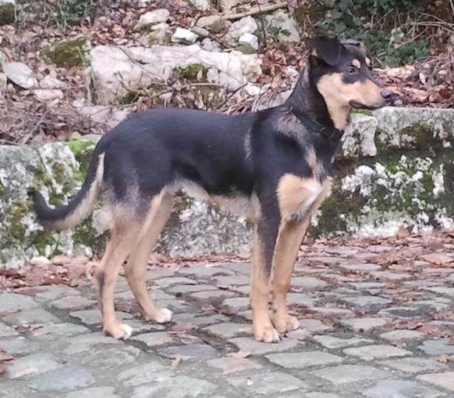 Kami, chien de randonnée - Page 2 Photo022