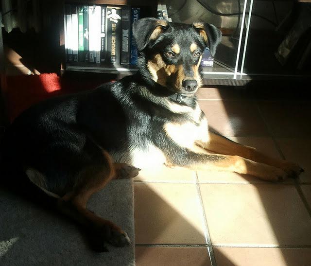Kami, chien de randonnée - Page 3 Photo026