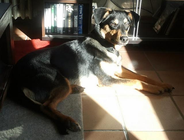 Kami, chien de randonnée - Page 3 Photo027
