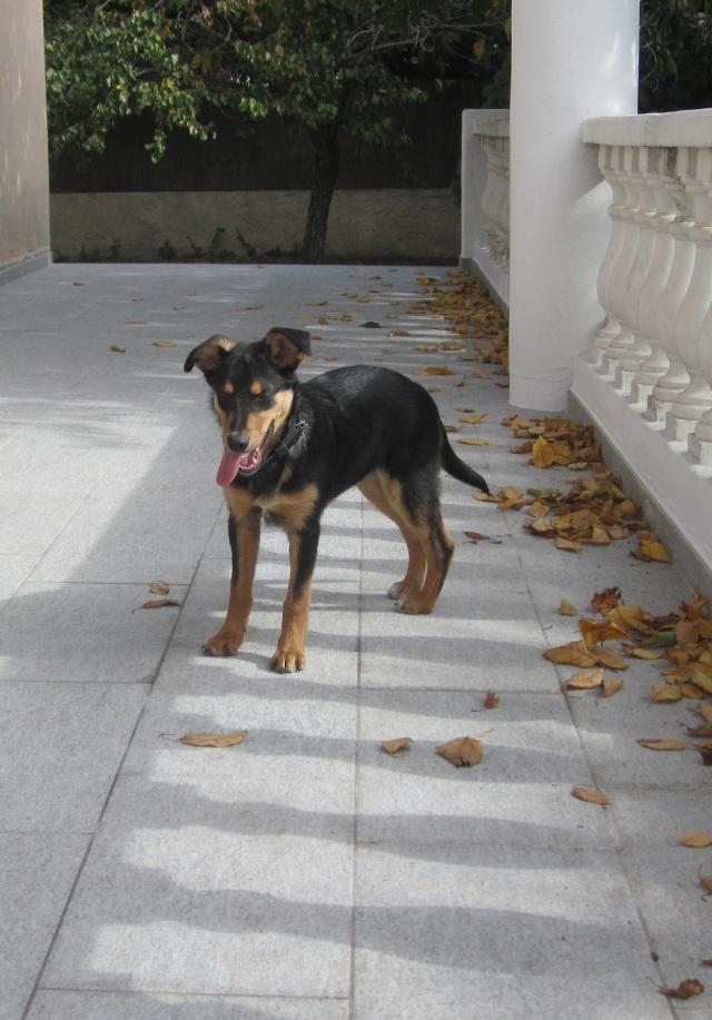 Kami, chien de randonnée Photo119