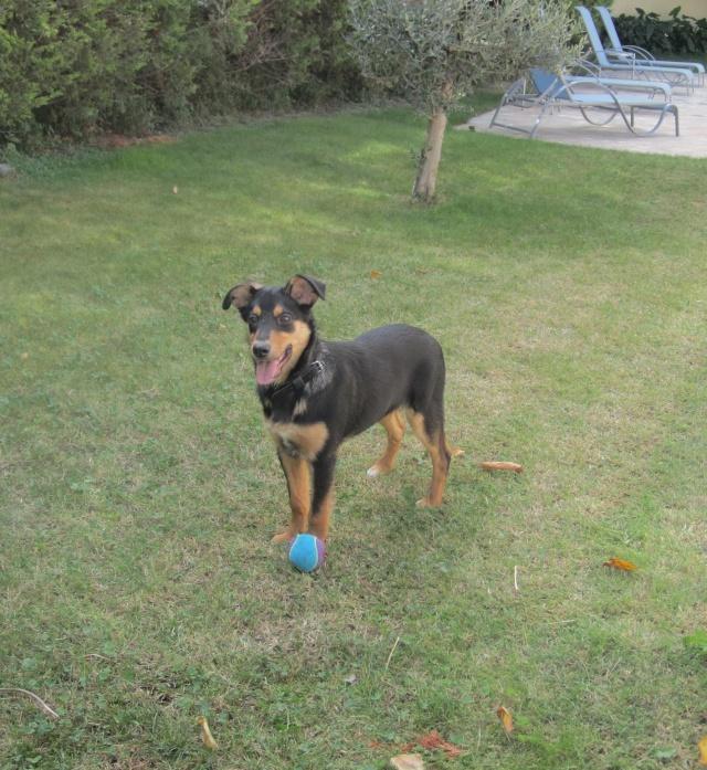 Kami, chien de randonnée Photo120