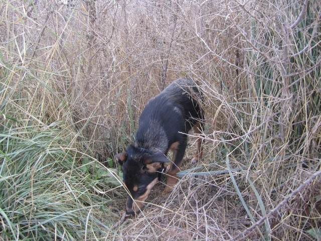 Kami, chien de randonnée Photo121