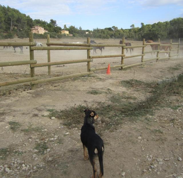 Kami, chien de randonnée Photo123