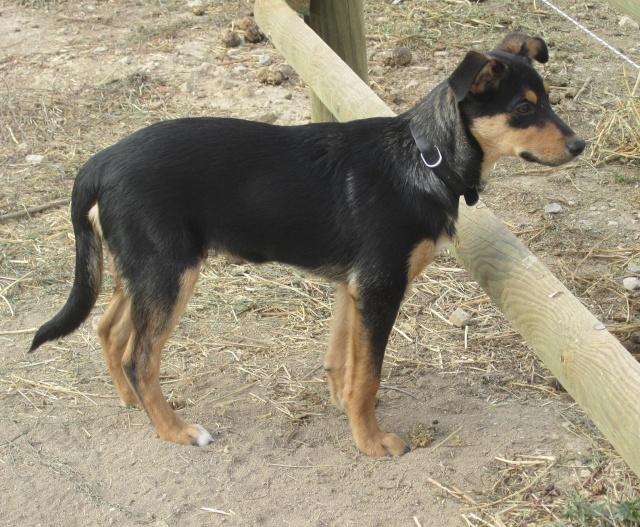 Kami, chien de randonnée Photo125