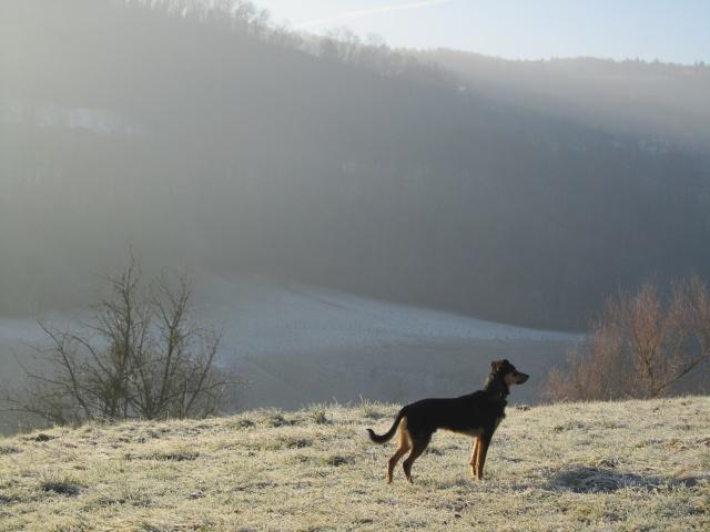 Kami, chien de randonnée - Page 2 Photo138