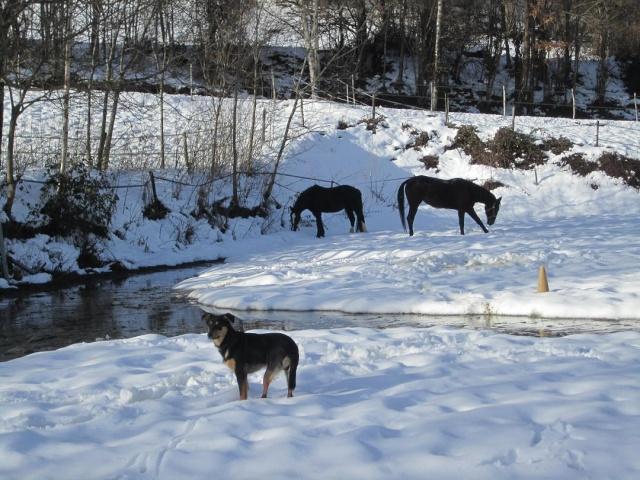 Kami, chien de randonnée - Page 2 Photo141