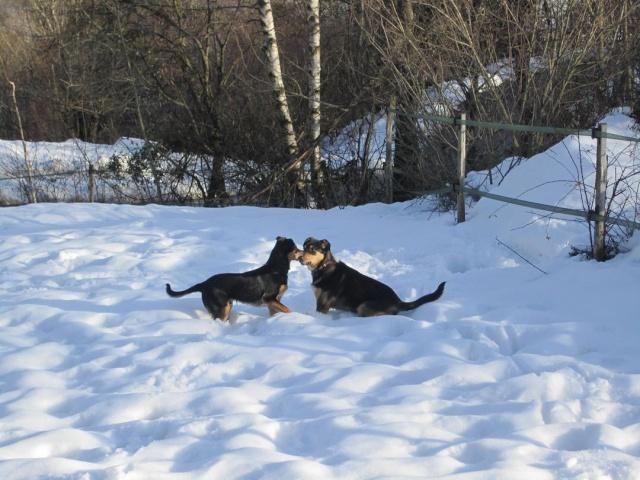 Kami, chien de randonnée - Page 2 Photo142