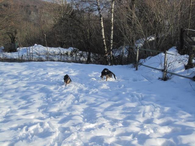 Kami, chien de randonnée - Page 2 Photo143