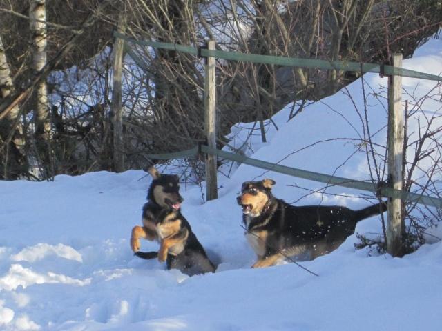 Kami, chien de randonnée - Page 2 Photo144