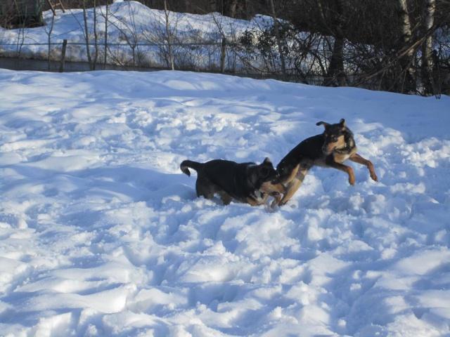Kami, chien de randonnée - Page 2 Photo145