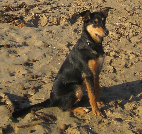 Kami, chien de randonnée - Page 2 Photo146