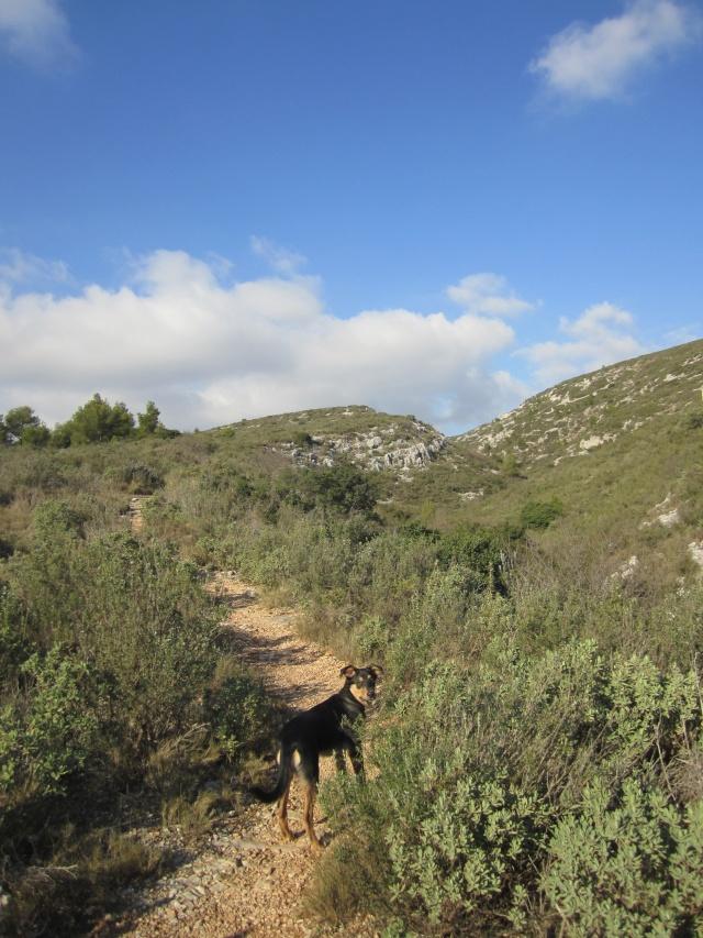 Kami, chien de randonnée - Page 2 Photo147