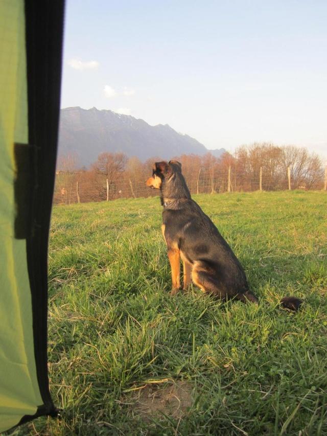Kami, chien de randonnée - Page 4 Photo206