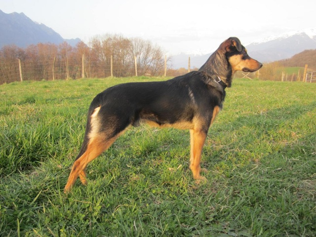 Kami, chien de randonnée - Page 4 Photo208