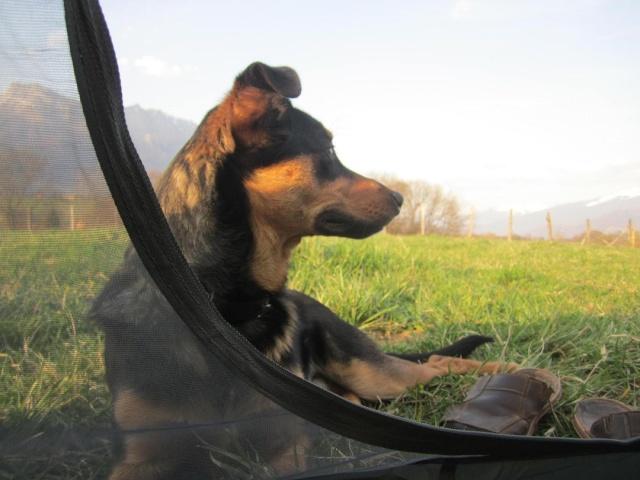 Kami, chien de randonnée - Page 4 Photo209