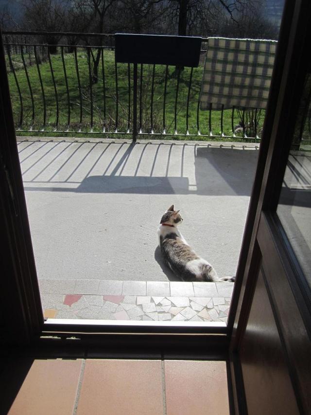 Kami, chien de randonnée - Page 4 Photo211