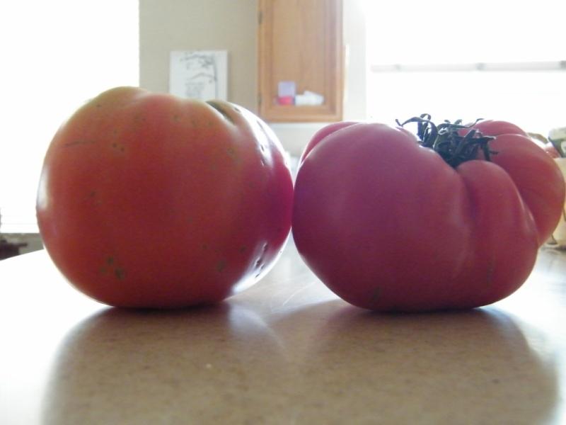 The Last Tomato 12_dec10