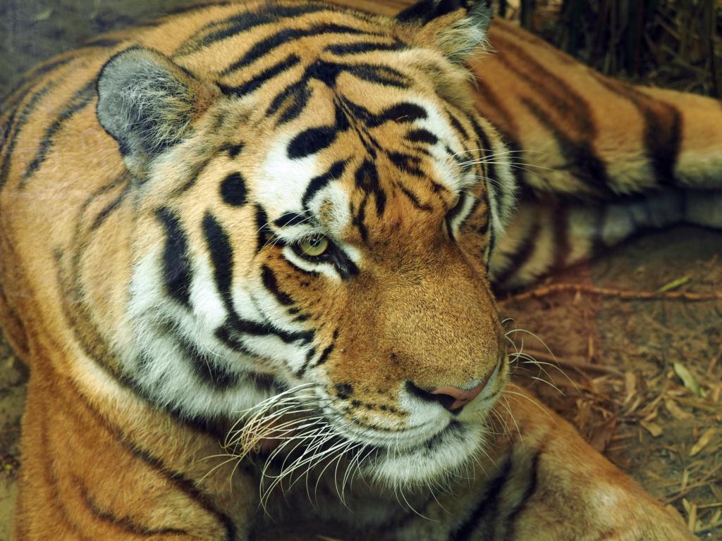 Zoo de la Palmyre.. P8270010