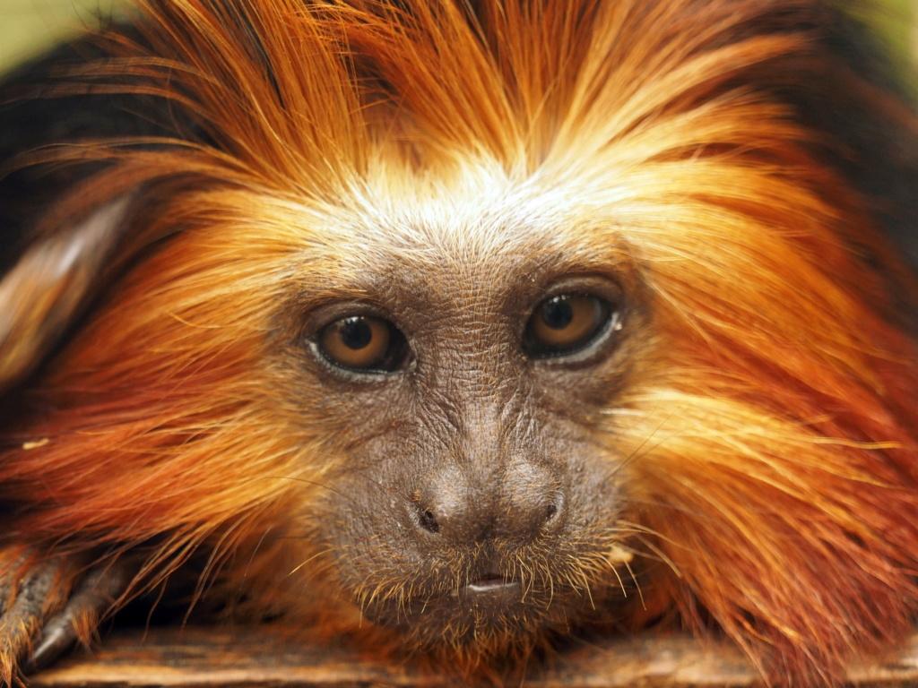 Zoo de la Palmyre.. P8270110