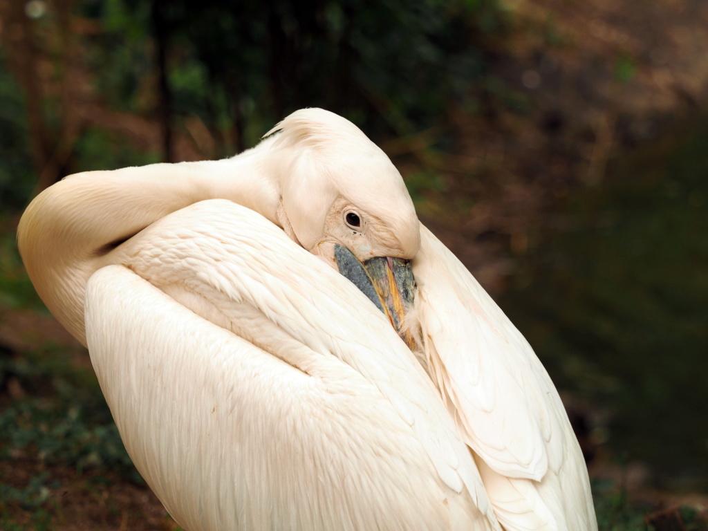 Zoo de la Palmyre.. P8270210