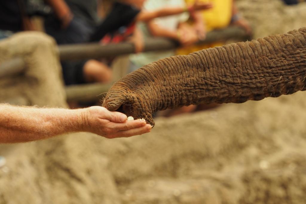 Zoo de la Palmyre.. P8270212