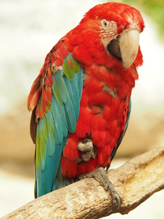 Zoo de la Palmyre.. P8270311