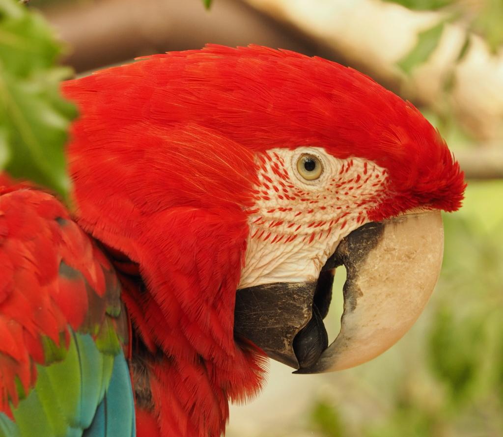 Zoo de la Palmyre.. P8270312
