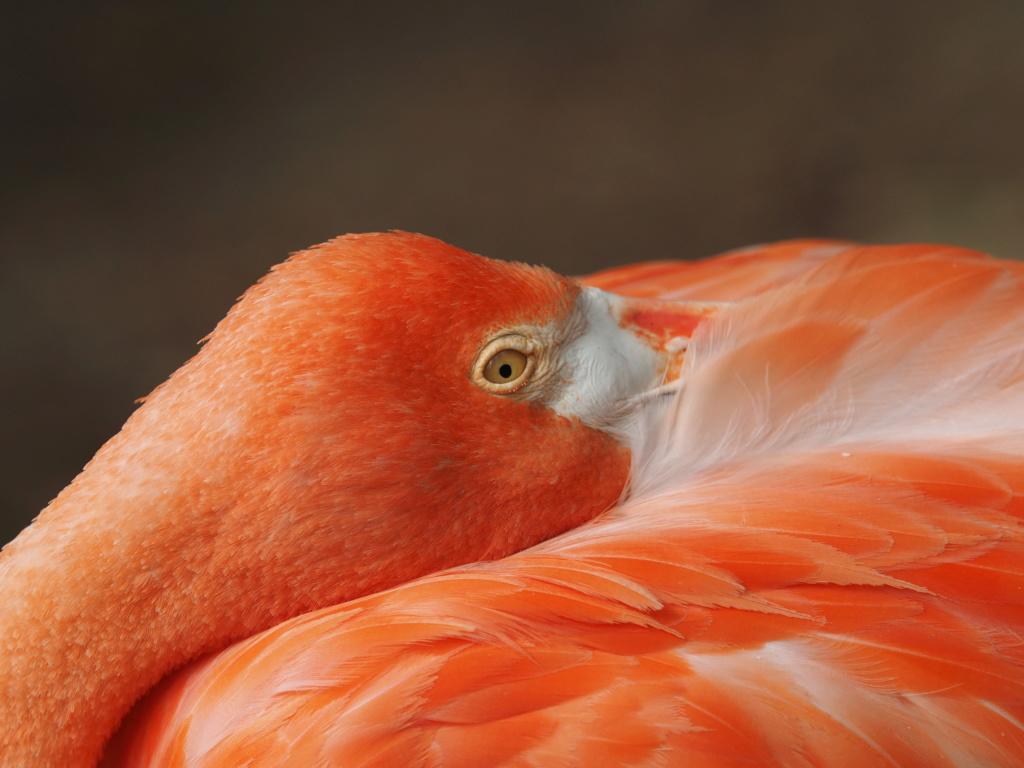 Zoo de la Palmyre.. P8270410