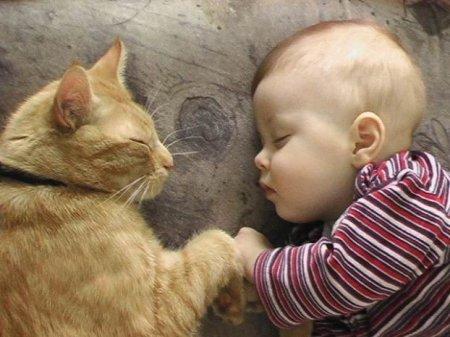 Bonne nuit les petits !! - Page 2 Cuccio11