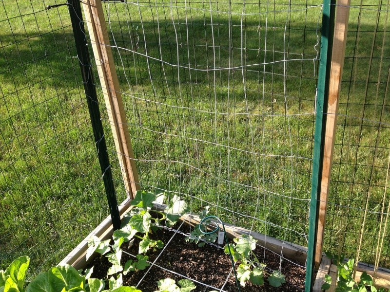 How would you string this pea trellis? Img_2823