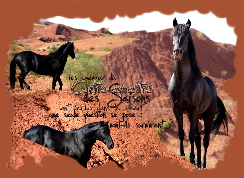 Le Centre Equestre Des Saisons