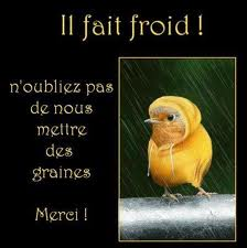 CAIRN DE FEVRIER 2012 - Page 2 Oiseau10