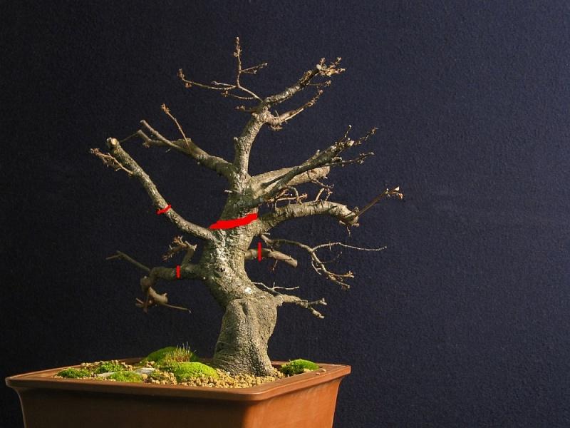Oak from 2006 017_1410