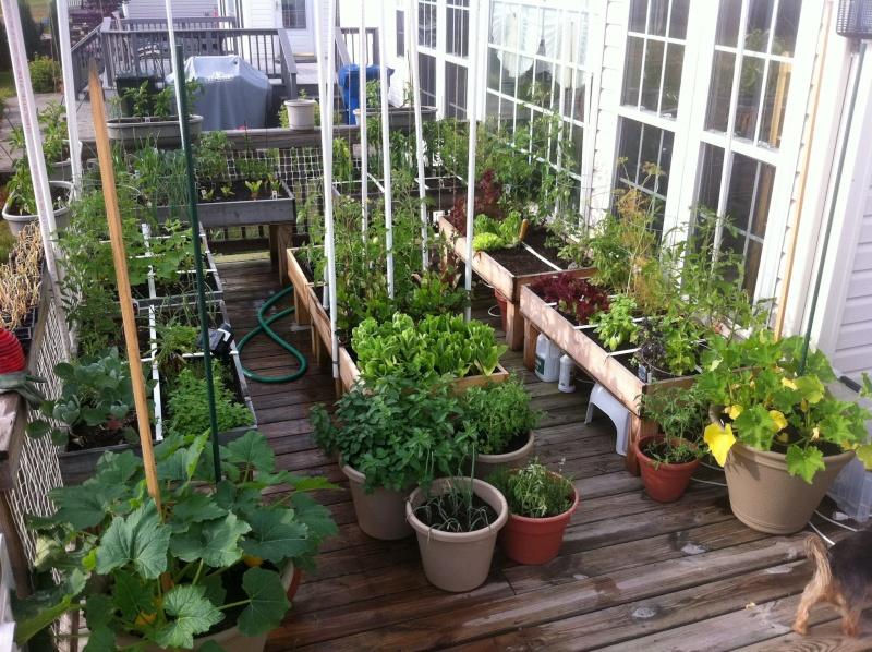 Table top gardens 26538610