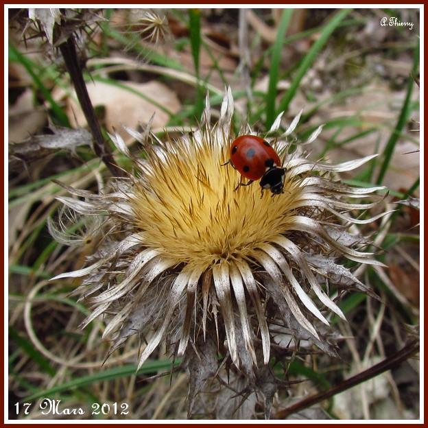 mon premier ophrys  - Page 2 Copie123