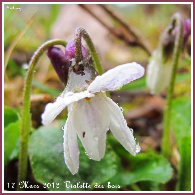 mon premier ophrys  - Page 2 Copie124