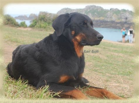 Parlons chien Beauce10
