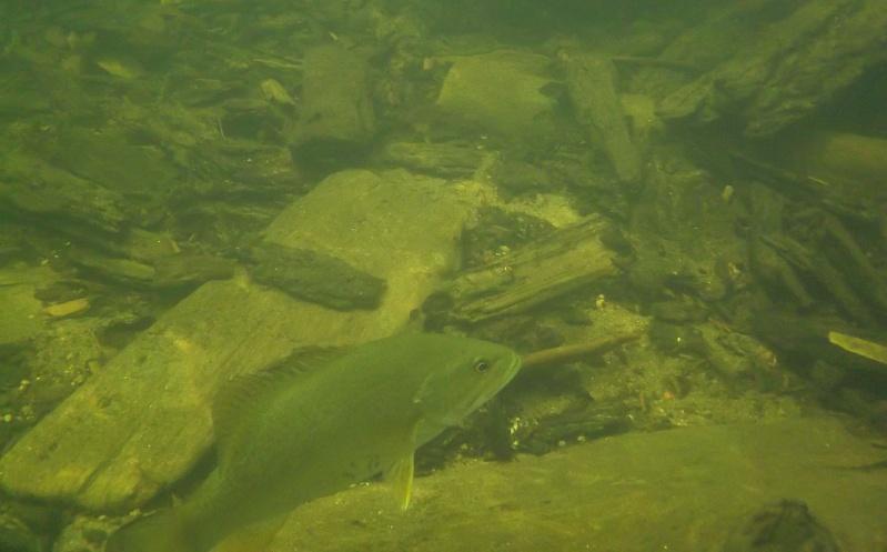 Plongée en apnée sur la rivière Petite-Nation – 24 juillet 2011 2410
