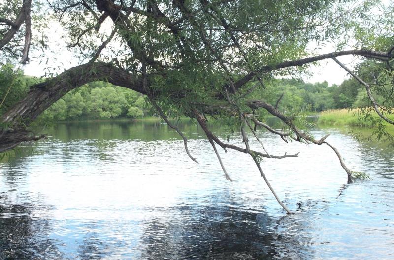 Plongée en apnée sur la rivière Petite-Nation – 24 juillet 2011 2810