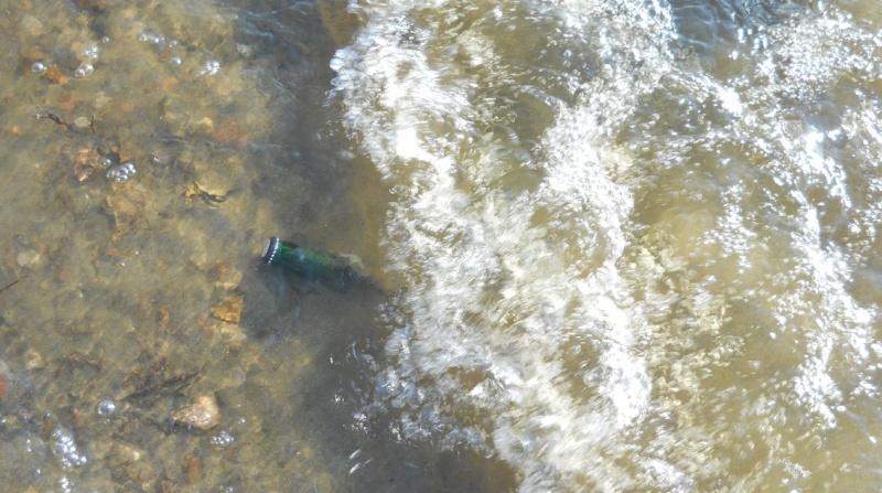 """Rapport de """"prospection"""" - Île Kettle (Rivière des Outaouais), Québec - 7 novembre 2011 2814"""