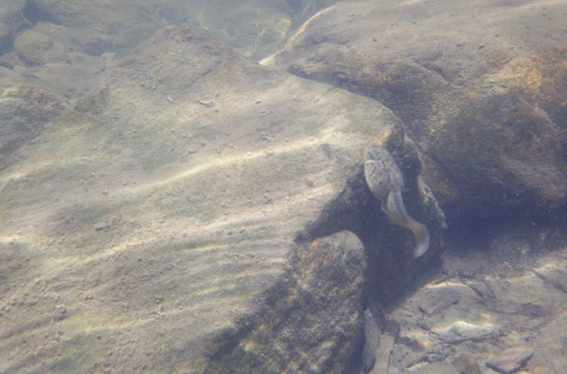 Plongée en apnée sur la rivière Petite-Nation – 24 juillet 2011 310