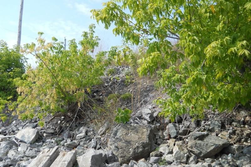 Rapport de plongée - Rivières Gatineau et des Outaouais - Premier septembre 2011 314