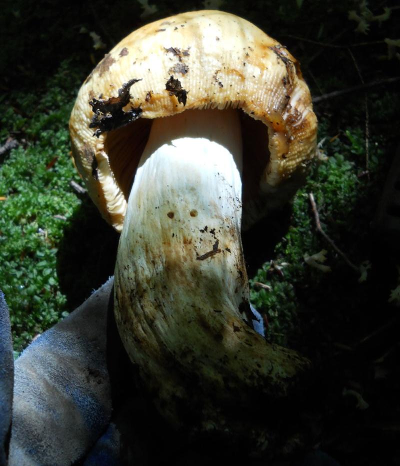 """Rapport de """"creuse"""" - Dompe de St-Ours, Québec - 18 septembre 2011 614"""