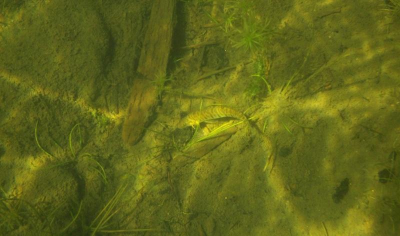 Plongée en apnée sur la rivière Petite-Nation – 24 juillet 2011 710