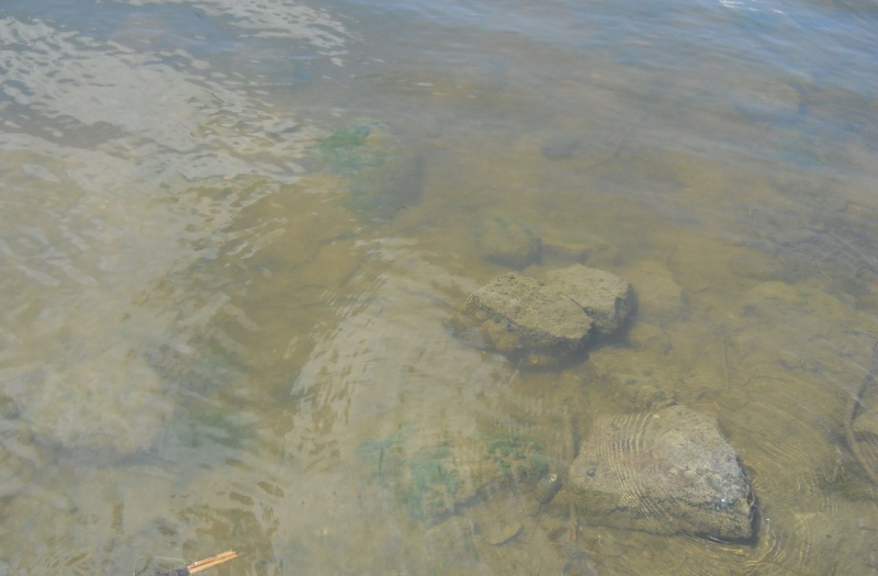 Rapport de plongée - Rivières des Milles-Isles/Laval - 4 août 2011 711