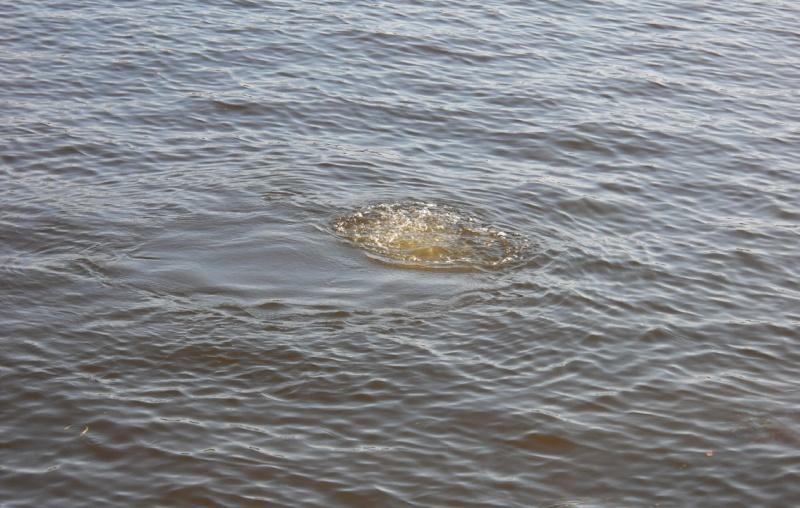 Rapport de plongée - Rivières Gatineau et des Outaouais - 25 septembre 2011 717