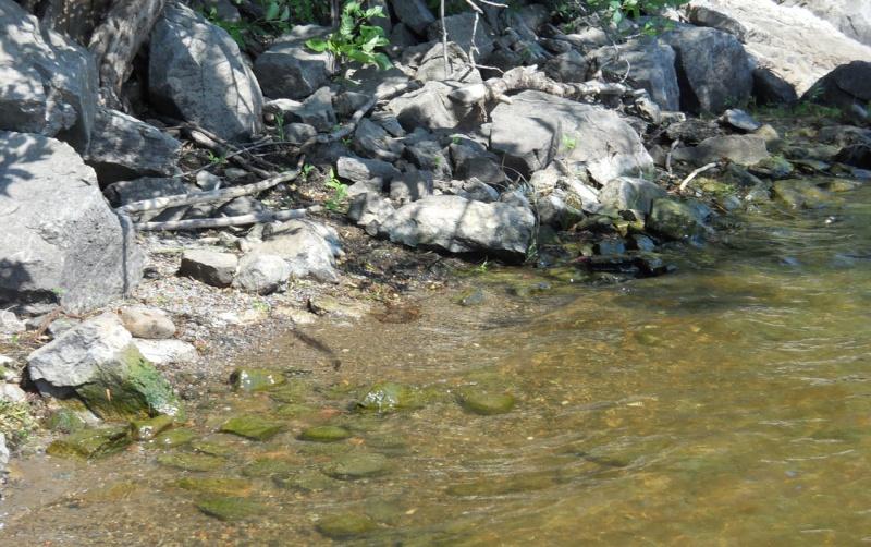 Rapport de plongée - Rivières Gatineau et des Outaouais - 21 Juillet 2011 Plonga19
