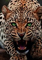 Nyuh's Exposition Art ♥ Jaguar10