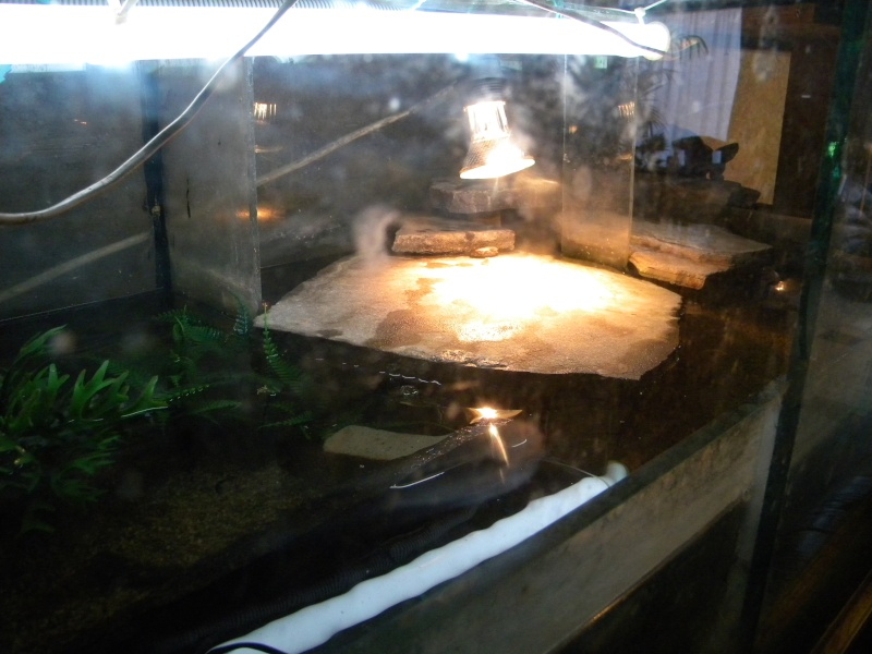 L'aquaterrarium de ma Rhinoclemmys pulcherrima Dscn2834