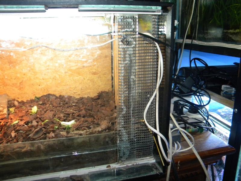 L'aquaterrarium de ma Rhinoclemmys pulcherrima Dscn2919